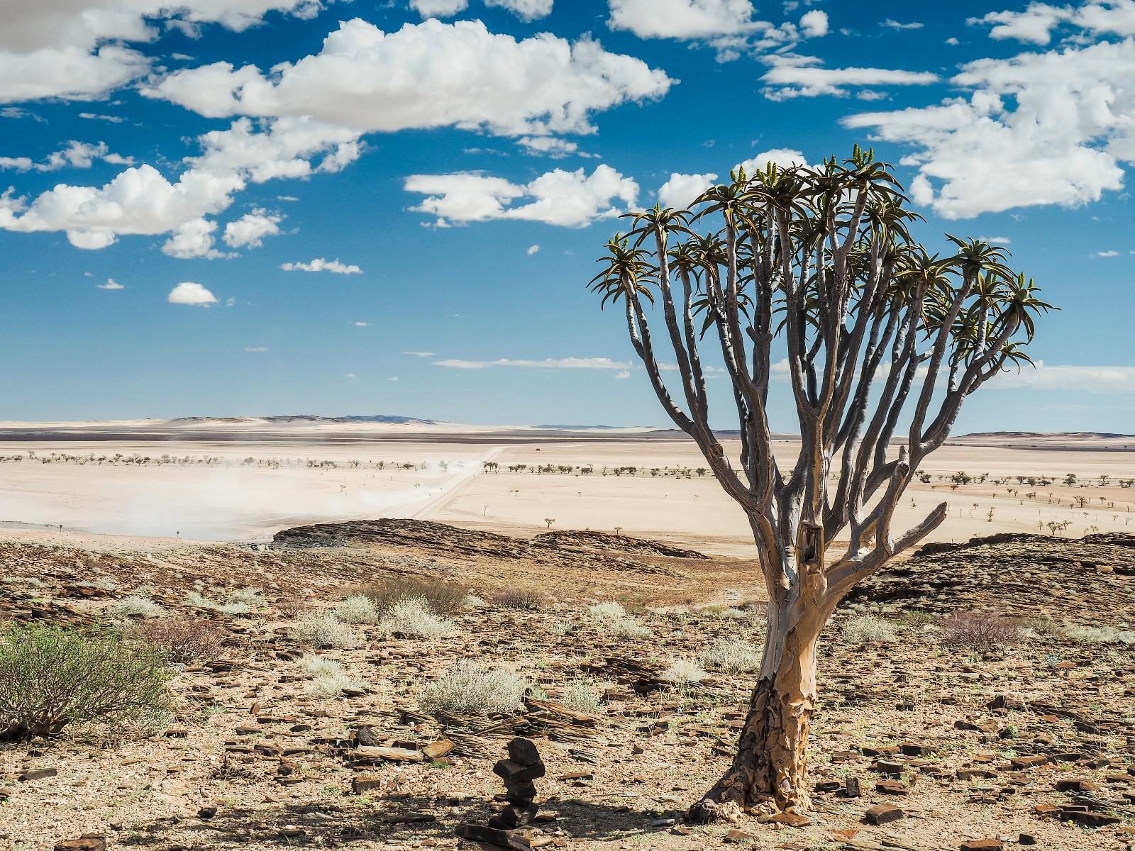 Quiver tree in Namibian landscape